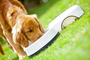 "WHY DOES MY DOG ""GULP"" HIS RAW PET FOOD DIET?"