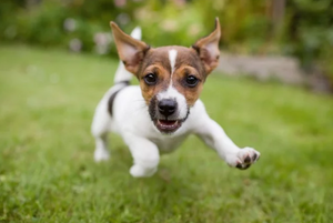 "TIPS FOR A ""PUPPY RAW DIET"""