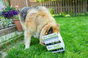 Top 10 Reasons to Feed Your Dog Raw