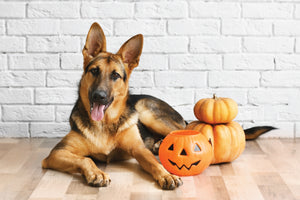 Keeping Pets Safe on Halloween