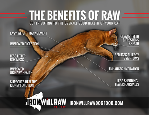 benefits of a raw food diet for cats