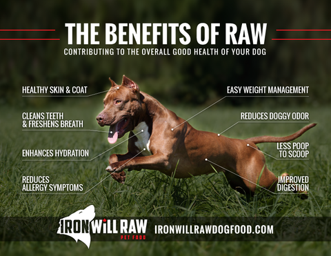 benefits of a raw food diet for dogs