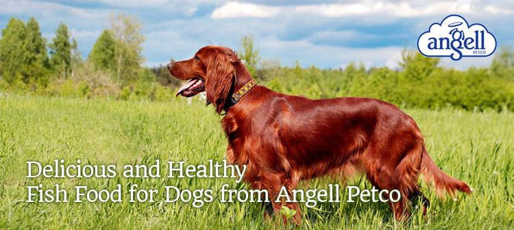 Angell Petco Fish for Dogs