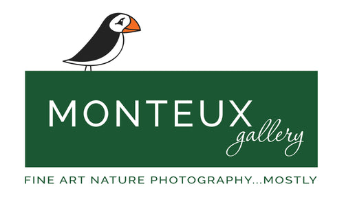 Monteux Gallery