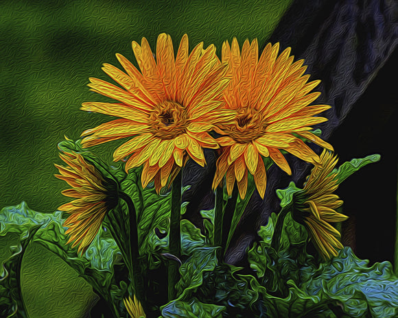 Ron Bruner's - Daisies - Somerset County Photo Note Cards - 6PKG