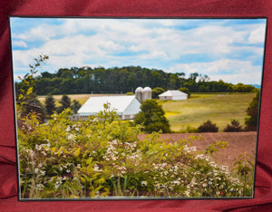 "Framed Photo of ""Wild Flowers"" Photographed by Carol Saylor"