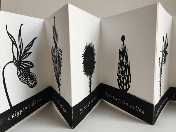 "Handmade Accordion Fold Book ""Botanicals of the Sonoran Desert"""
