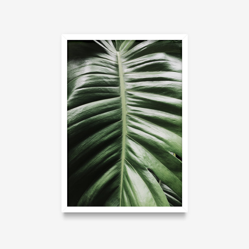 Plantas - Folha Monstera