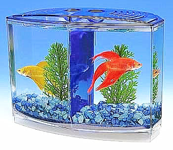 Betta-bow Front Dual Tank Kit Boxed