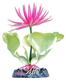 Sinker Plant Red Water Hyacinth Bottom