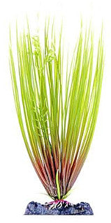 Sinker Plant Hair Grass Large