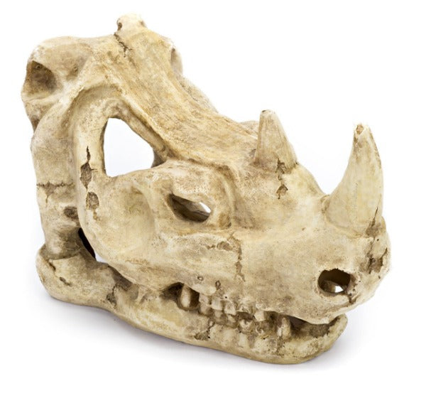Resin Rhino Skull 3.5x6x5in-Decor-Cichlid-Petland Canada