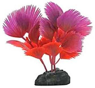 Betta Plant Fan Palm