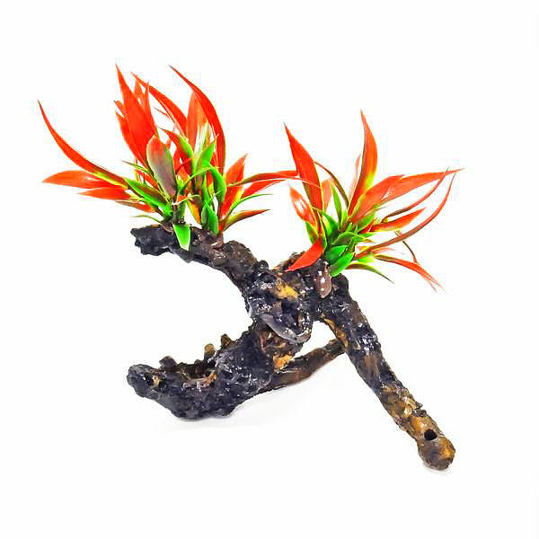 Aquatop Plant Firey Red 7 inch On Resin Driftwood
