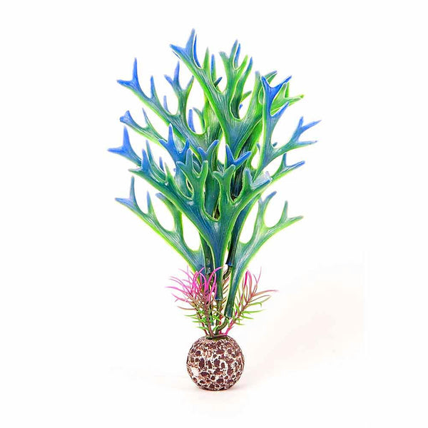 Aqua Top Staghorn Plant 8 inch Multi Colour; available in different styles
