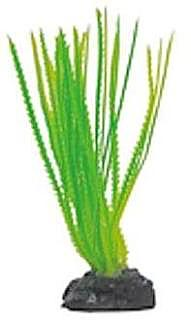 Betta Plant Hair Grass
