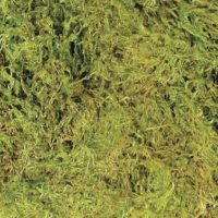 Zoo Med Terrarium Moss; available in different sizes.-Substrate & Liners-Zoo Med-15 /20 gal-Petland Canada