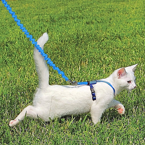 Petsafe Come with Me Kitty, Easy Walk Harness & Bungee Lead for Cats-Collars & Leashes-PetSafe-Petland Canada