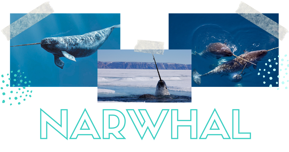 JOLYN Australia Swimwear blog - new prints facts about sea animals narwhal