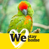 WeWellington Facebook Profile Frame - We Stay Home