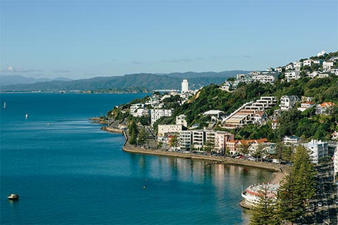 View to Oriental Bay