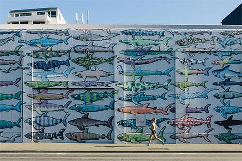 Shark wall street art