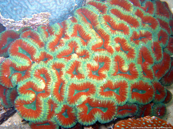 How to Identify the 3 Basic Types of Coral