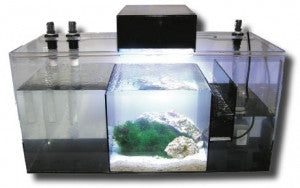 How to Pick the Best Filter for a Saltwater Aquarium