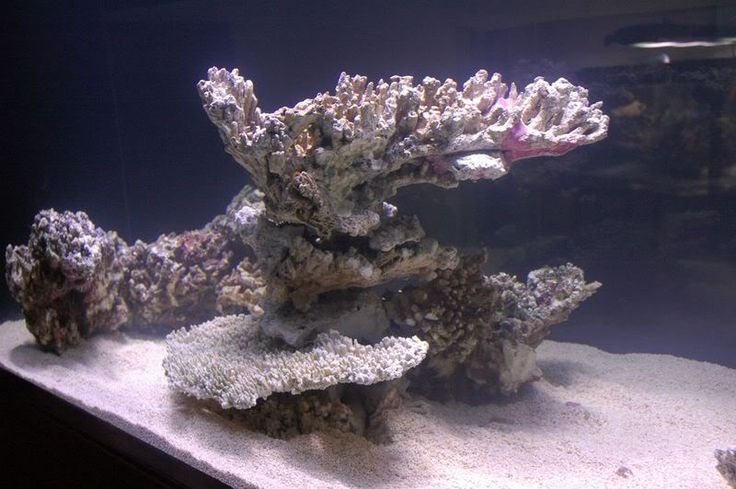 How To Stock a Live Coral Aquarium