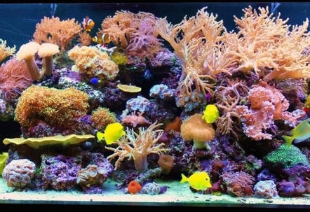 Stocked Reef Aquarium