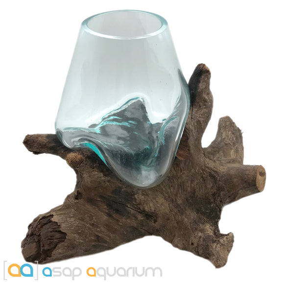 Betta Fish Bowl Unique Molten Glass on Teak Driftwood M197