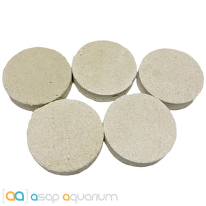 5 LARGE Reef Frag Discs Cured for Live Coral Propagation - ASAP Aquarium