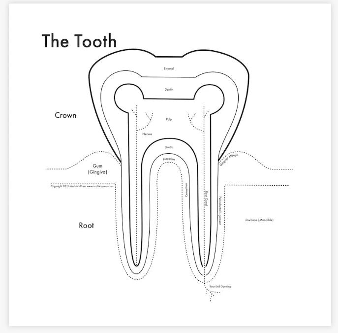 Tooth Map Print