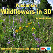 Wisconsin Wildflowers in 3D