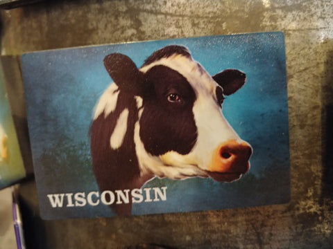 Cow Portrait Magnet