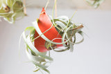 Large Leather Air Plant Hanger - Assorted Colors