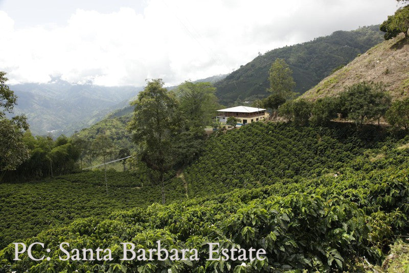 Cascara Santa Barbara Estate (Coffee Cherry)