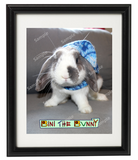Bini the Bunny - Framed Head Shot