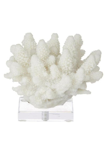 Coral Sculpture on Stand - Small-albi-The Vignette Room - Unique & Inspiring Furniture & Homewares in Paddington Sydney
