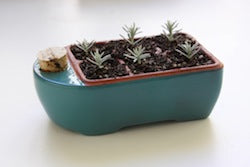 Turquoise Clay Seed-Starter250
