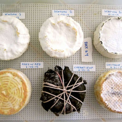Homemade bloomy rind cheeses