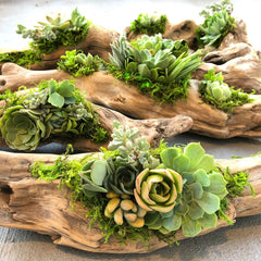 Craft Your Own Driftwood Succulent Planter