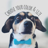 Eco-Friendly Bow Tie Collar Clip-8 Color & 2 Size Options-Sofa City Sweethearts-Sofa City Sweethearts