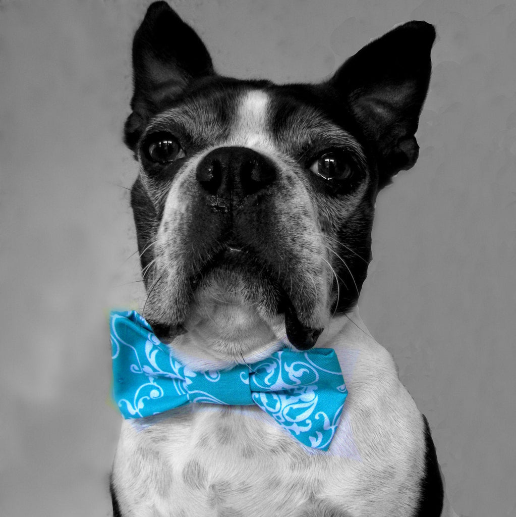 Dog Collar Bow Tie-Teal Blue Damask-Sofa City Sweethearts-Sofa City Sweethearts