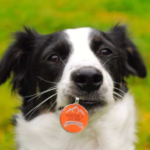 """Adventure is Out There"" Personalized Dog ID Custom Pet Tag You Choose Tag Size & Colors"
