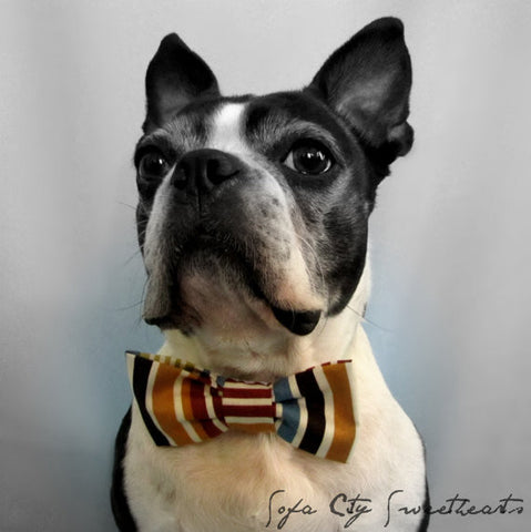 Earthy Stripes Bow Tie