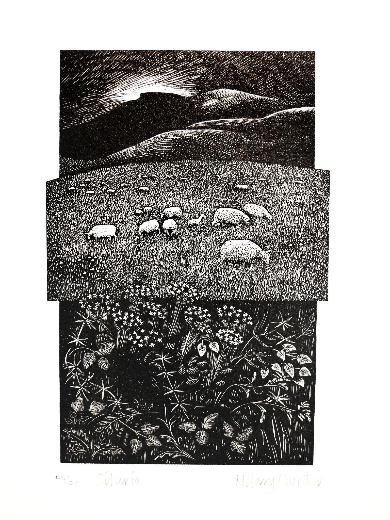 Hilary Paynter Wood Engraving: Siluria