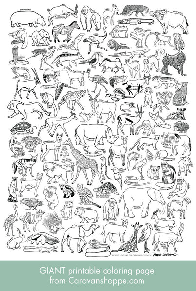 100 AFRICAN ANIMALS giant coloring poster