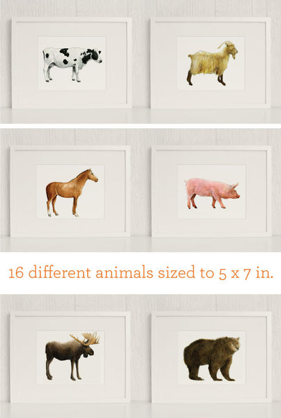 The Zoo: Watercolor Animals