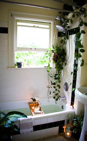 bathtub with plants scene